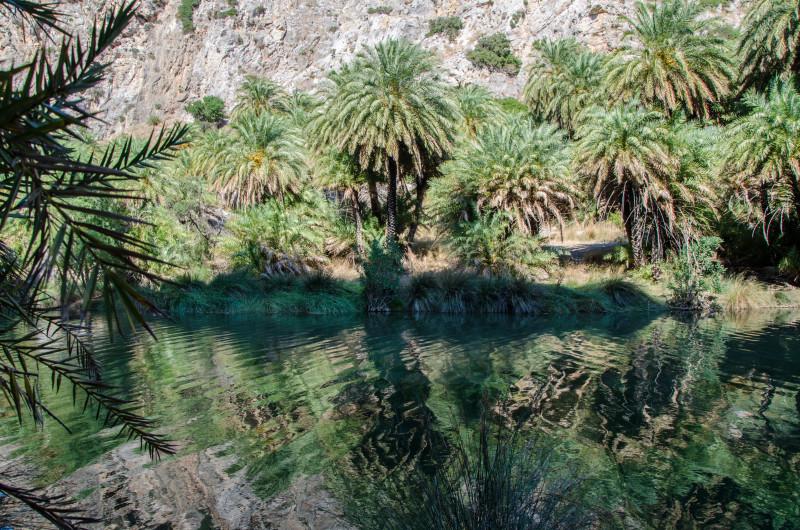 Walk up the creek, beautiful palm trees