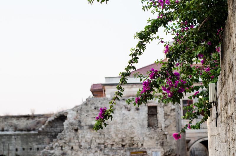Flowers in Rhodes Greece